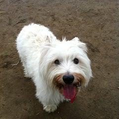 Photo taken at Costa Mesa Bark Park by Steve S. on 12/19/2011