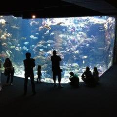 Photo taken at Steinhart Aquarium by Alfred C. on 7/15/2012
