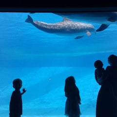 Photo taken at Texas State Aquarium by Amanda B. on 4/17/2012