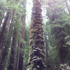 Photo taken at Muir Woods National Monument by Stacy S. on 7/17/2012