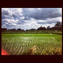 Photo taken at Ubud by Mitch V. on 5/3/2012