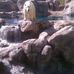 Photo taken at ABQ BioPark Zoo by Kelli S. on 10/15/2011