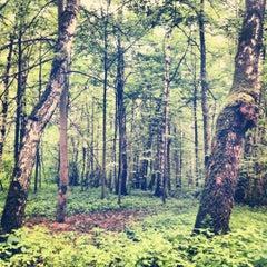 Photo taken at Волшебный Лес by Ekaterina T. on 6/26/2012