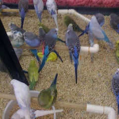 Photo taken at Pet Supermarket by Holly A. on 9/11/2012