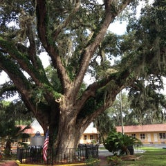 Photo taken at The Old Senator Tree by Naty B. on 8/23/2012