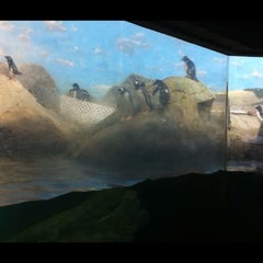 Photo taken at Penguin House at Riverbanks Zoo by Jer L. on 7/15/2012