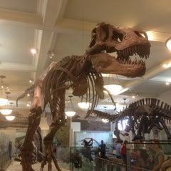 Photo taken at David H. Koch Dinosaur Wing by Jack G. on 8/22/2012