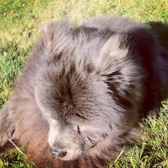 Photo taken at Buena Vista Park Dog Run by Mark H. on 9/11/2012
