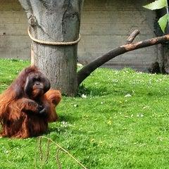 Photo taken at Dublin Zoo by Darja S. on 5/5/2012