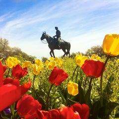 Photo taken at Texas Tech University by Dawn W. on 4/12/2011