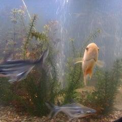 Photo taken at lucky ocean aquarium by William G. on 8/27/2011