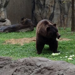 Photo taken at Brookfield Zoo by Danie F. on 8/26/2012