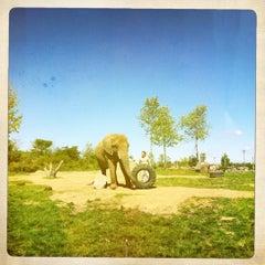 Photo taken at Zoo de Granby by Vannara T. on 9/11/2011