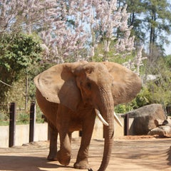 Photo taken at Riverbanks Zoo And Gardens by Wanna See It All on 9/20/2011