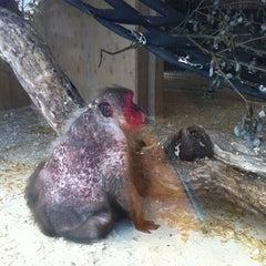 Photo taken at Monkey World - Ape Rescue Centre by Elizabeth G. on 7/9/2011