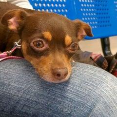 Photo taken at Houston Humane Society by Megan B. on 11/6/2011