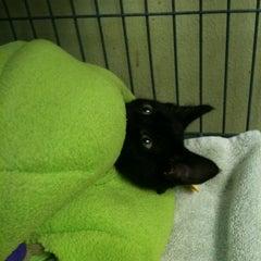 Photo taken at Town Lake Animal Shelter by Karrie L. on 2/12/2011