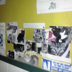 Photo taken at Catalina Island Humane Society Inc. by Airalin B. on 12/5/2011