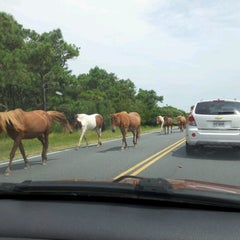 Photo taken at Assateague Island National Seashore (Maryland) by Jayne S. on 7/23/2012