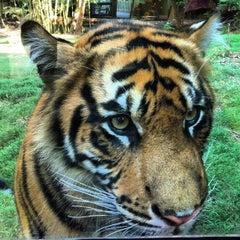Photo taken at Zoo Atlanta by Amanda H. on 8/2/2012