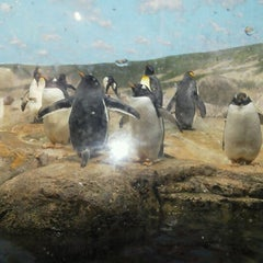 Photo taken at Penguin House at Riverbanks Zoo by Zachariah D. on 2/4/2012