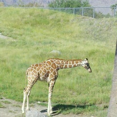 Photo taken at The Living Desert Zoo & Botanical Gardens by Cindy W. on 8/6/2012