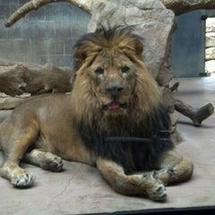 Photo taken at Henry Doorly Zoo and Aquarium by Julez B. on 1/21/2012