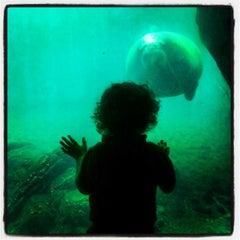 Photo taken at New York Aquarium by Mottel L. on 7/20/2012
