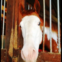 Photo taken at Sunrise Stables Equine Rescue by Brook H. on 4/27/2012