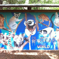 Photo taken at Duke Lemur Center by Stephanie T. on 9/6/2012