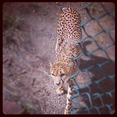 Photo taken at Denver Zoo by Hunter H. on 9/13/2012