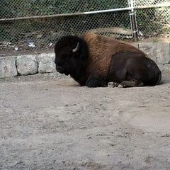 Photo taken at High Park Zoo by Julie Y. on 9/17/2011