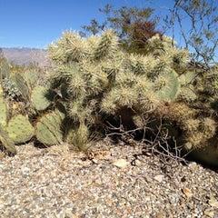 Photo taken at Saguaro National Park by Dana on 12/26/2011