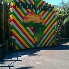 Photo taken at African Forest @ Houston Zoo by Deedra B. on 10/14/2011