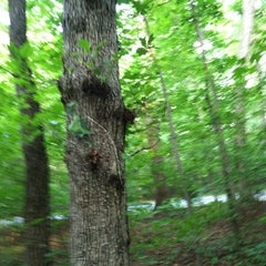 Photo taken at Guilford Courthouse National Military Park by K F. on 5/24/2012