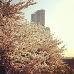 Photo taken at 양재천 산책로 (Yangjaecheon Trails) by yangkoon on 4/17/2012