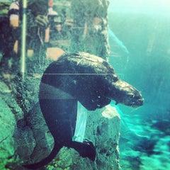 Photo taken at New York Aquarium by Raul C. on 6/16/2012