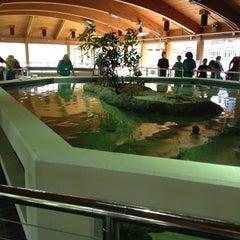 Photo taken at Gumbo Limbo Nature Center by Jeffrey C. on 6/2/2012