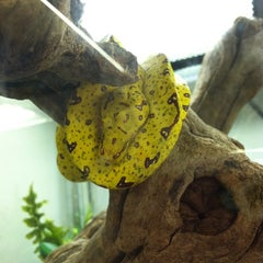 Photo taken at LLL Reptile by RaShelle G. on 6/1/2012