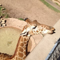 Photo taken at Abilene Zoo by Bradley H. on 4/6/2012
