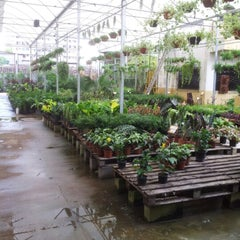 Photo taken at Floricultura Yamanaka by Aline P. on 7/18/2012