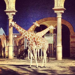 Photo taken at Zoologischer Garten Berlin by Matas on 3/17/2012