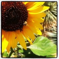 Photo taken at Denver Botanic Gardens by Brandon A. on 7/26/2012