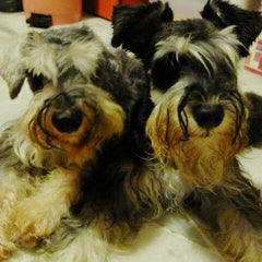 Photo taken at Asean Puppy by Abbie L. on 6/10/2012