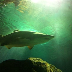 "Photo taken at SEA LIFE Minnesota Aquarium by Jason ""Gus"" W. on 8/12/2012"