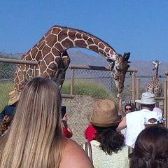 Photo taken at The Living Desert Zoo & Botanical Gardens by Elana M. on 8/6/2012