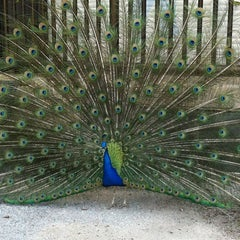 Photo taken at Henry Doorly Zoo and Aquarium by T T. on 5/9/2012