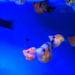 Photo taken at Aquarium 319 by Andree S. on 6/14/2012