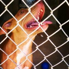 Photo taken at Town Lake Animal Shelter by Traci P. on 7/5/2012