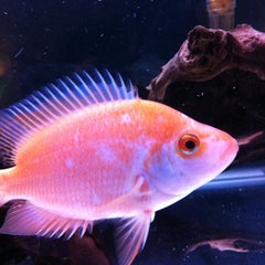 Photo taken at Fish Tank Maintenance Time by Mike ⚽⚽ on 3/21/2012